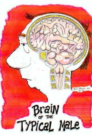cerveau556
