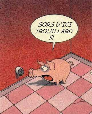 Image Cochon Humour Animaux ☺ Humour Maximum: humour.cote.azur.fr/show-image-cochon-280.htm