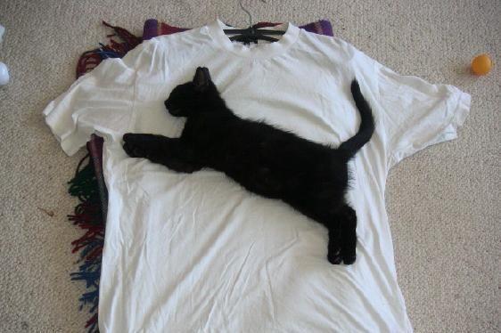 Fotos curiosas o graciosas T-shirt-puma855